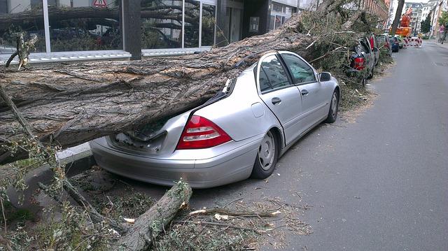 padlý strom na auto.jpg
