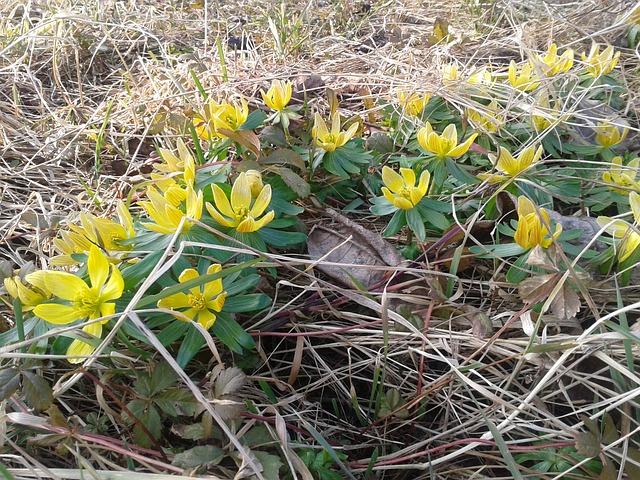 květiny talovínu