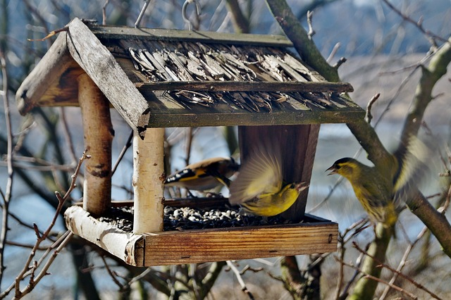 ptáčci a krmítko